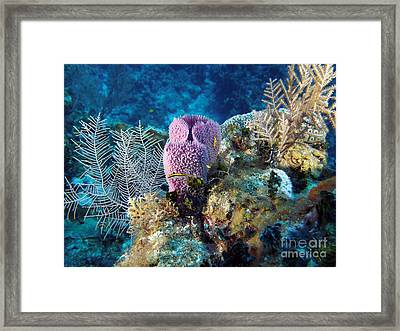 Cayman Reef Framed Print by Carey Chen