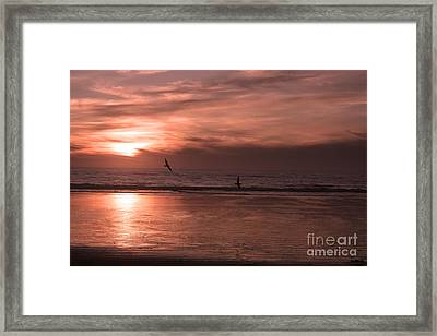 Cayucos Beach With Seagulls Framed Print by Ian Donley