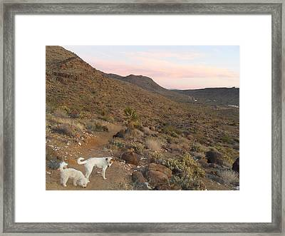 Ceaser, Mocha, And Chico In The Cerbat Mountains Framed Print by James Welch