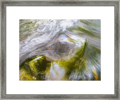Cedar 16 Framed Print