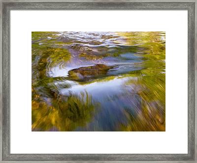 Cedar 22 Framed Print
