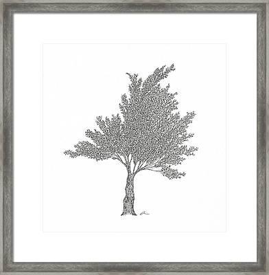 Cedar Framed Print