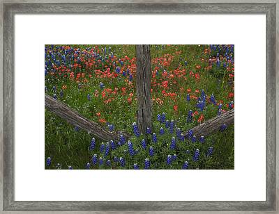 Cedar Fence In Llano Texas Framed Print