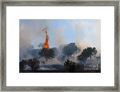 Cedar Fire Framed Print