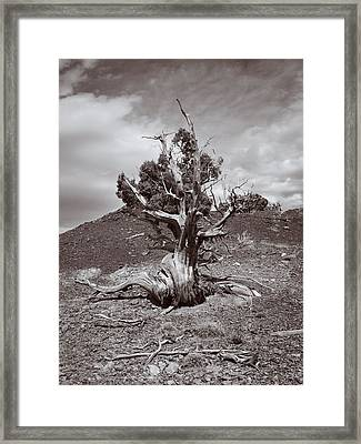 Cedar Landscape Framed Print