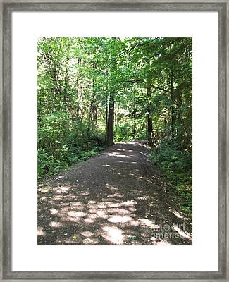 Framed Print featuring the photograph Cedar Shadow Steps by Kim Prowse