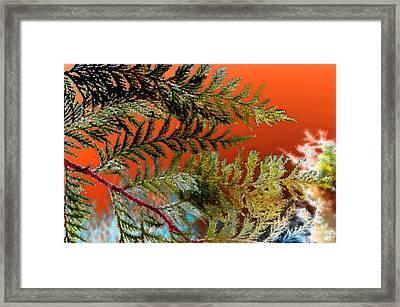 Framed Print featuring the photograph Cedar Canvas by Gwyn Newcombe