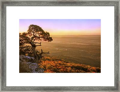 Cedar Tree Atop Mt. Magazine - Arkansas - Autumn Framed Print