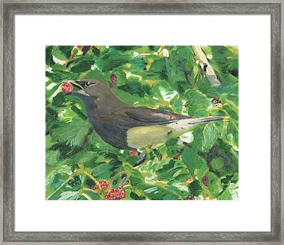 Cedar Waxwing Eating Mulberry Framed Print