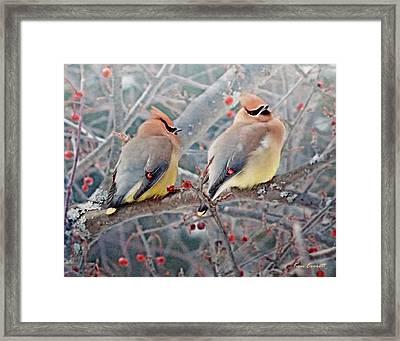 Cedar Waxwings Framed Print by Ken Everett