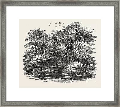 Cedars, At Chorley Wood House, Hertfordshire Framed Print by English School