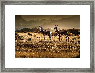Cederberg Mountains - Bontebok Couple Framed Print