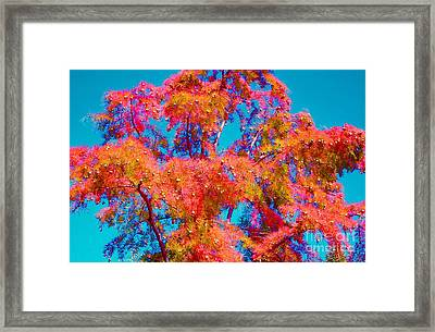 Celebrate Autumn Framed Print by Ann Johndro-Collins
