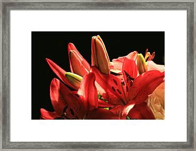Celebrating Healing Framed Print