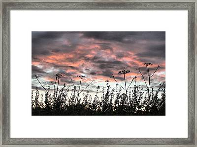 Celebrating Sunset Framed Print