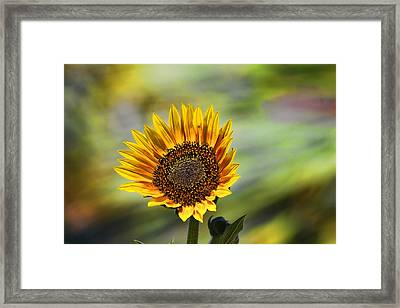 Celebrating The Sunlight Framed Print