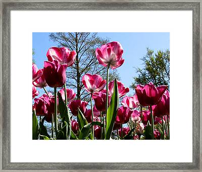 Framed Print featuring the photograph Celebration Of Spring by John Freidenberg