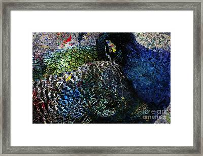 Celebration Of The Peacock #2 Framed Print