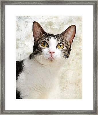 Celebrity Framed Print by Andee Design