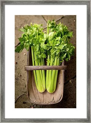Celery In A Basket Framed Print