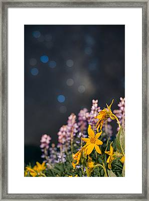 Celestial Boquet Framed Print by Mike Berenson