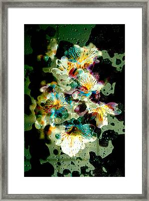 Celestial Flowers Framed Print by Loriental Photography