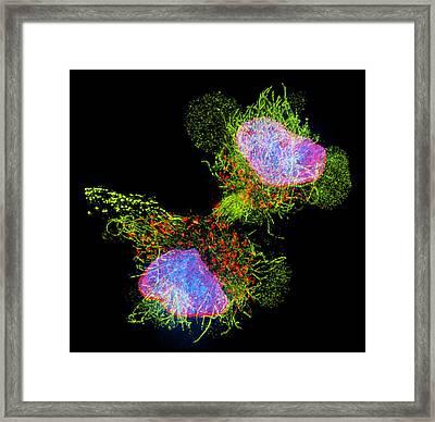 Cell Division Framed Print