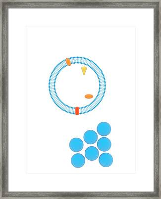 Cell Response Mechanisms Framed Print by Science Photo Library