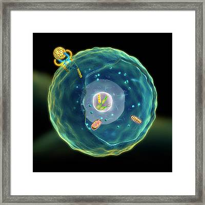 Cell Signal Transduction Framed Print