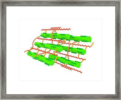 Cell Wall Microstructure Framed Print