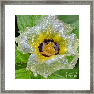 Cellophane art fine art america cellophane flower center soaked framed print mightylinksfo