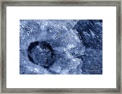 Cellophane Flower- Sapphire Framed Print by Darla Wood