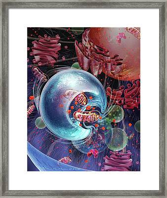 Cellular Autophagy Framed Print by Nicolle R. Fuller