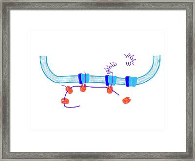 Cellular Protein Synthesis Framed Print by Science Photo Library