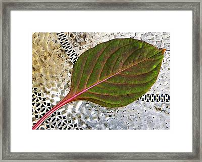 Celosia Foliage Framed Print by Chris Berry