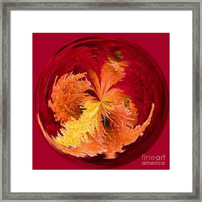 Celosia On Fire Framed Print
