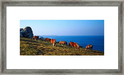 Celtic Horses Grazing At A Coast Framed Print by Panoramic Images