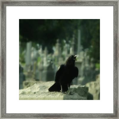Cemetery Corvidae As It Caws Framed Print by Gothicrow Images