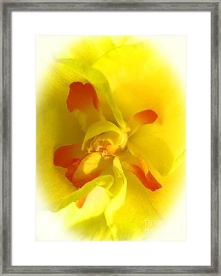 Center Daffodil Framed Print by Tina M Wenger
