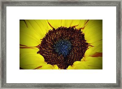 Center Of A Sunflower Framed Print by Cynthia Guinn