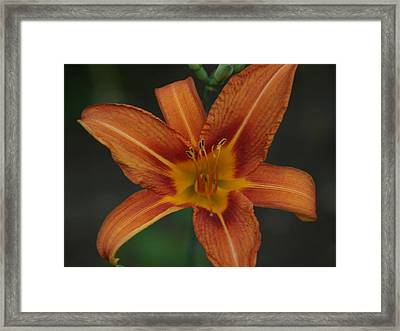 Center Of All Framed Print by Corina Bishop