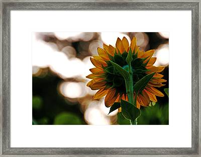 Center Of Attention  Framed Print by John Harding