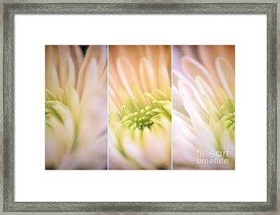 Center Of Attention Framed Print by Lois Bryan