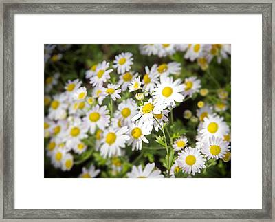 Center Of Attention Framed Print by Mark Andrew Thomas