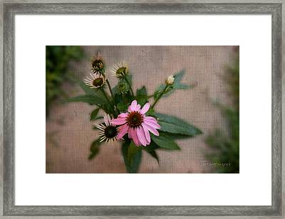 Center Of Attention Framed Print by Terri Harper