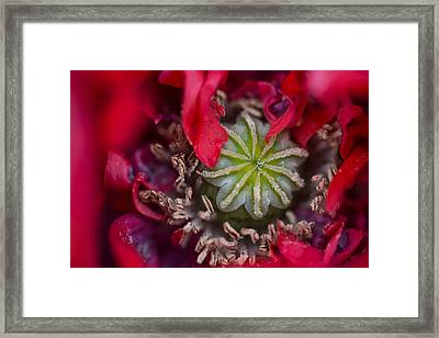 Center Of Beauty Framed Print by Chanin Green