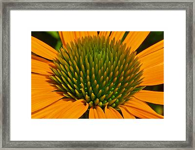Center  Of Cone Flower Framed Print by Tikvah's Hope