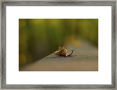 Center Stage 2 - A Single Leaf Framed Print by Jane Eleanor Nicholas