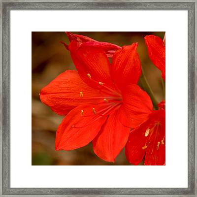 Center Stage Framed Print by Art Block Collections