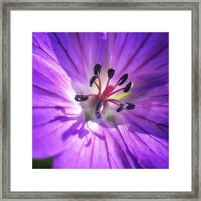Center Stage Framed Print by Caitlyn  Grasso
